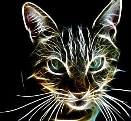 Tony the cat