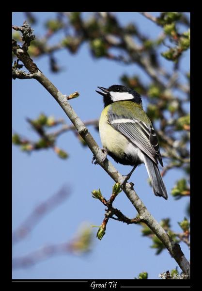 It\'s Spring let\'s Sing!! by SteveMoulding