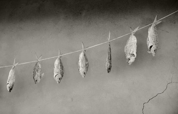 Drynes by Maitha