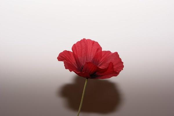 Poppy 2 by Gazsu