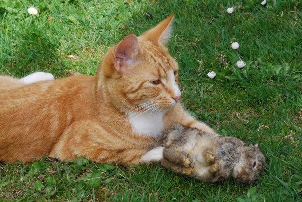 That Pesky Wabbit by brownbear