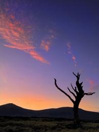 Skeletal Tree and Fiery Sky.