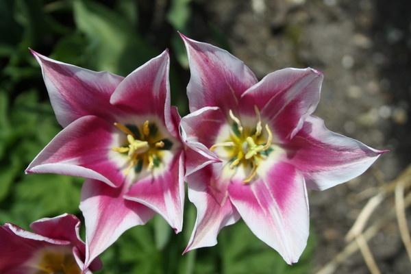 Flower1 by popeyebilly
