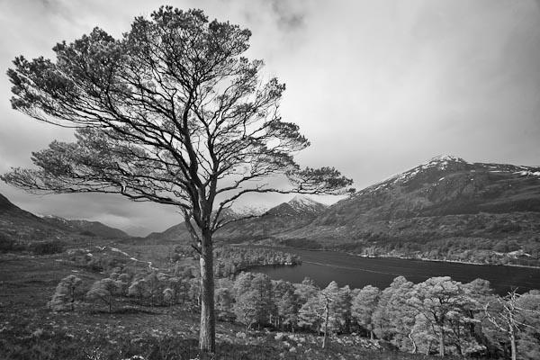 Glen Affric by iotum