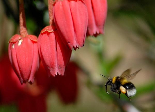 Bee II by ChrisJD