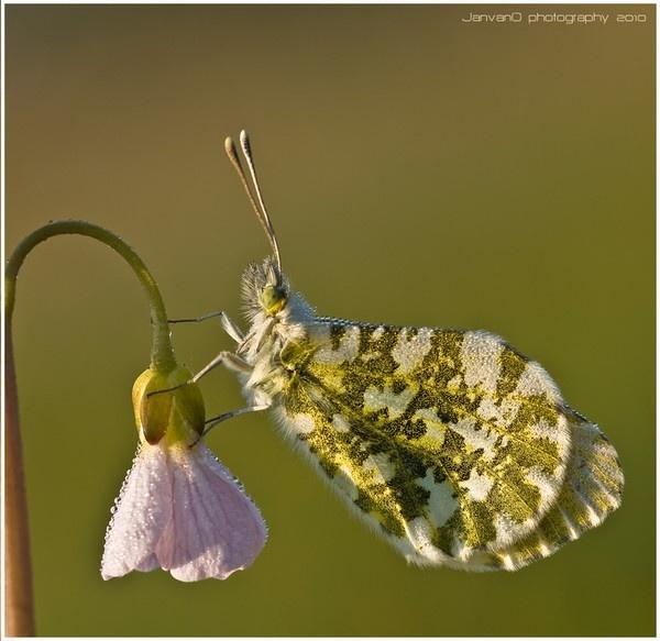 Morning dew macro by Olympjan
