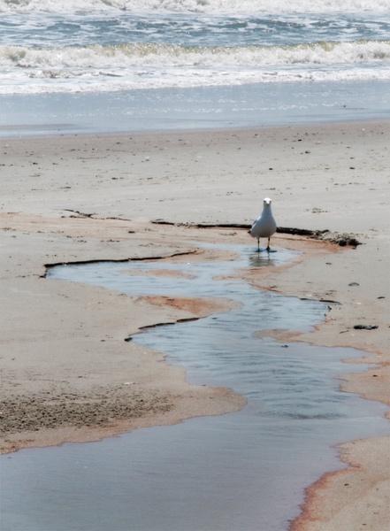 Gull Seaside by PeelNStick