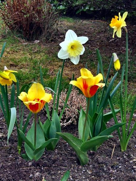 My garden, Spring colour by Brilane