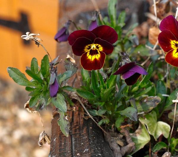 flower box by HuntedDragon