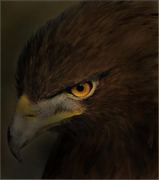 Eagle Eye by JdeNLucas