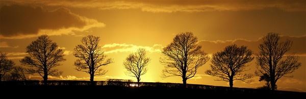 "\""six trees\"" by PaulLiley"