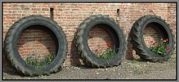 Tyre-d . . . . .