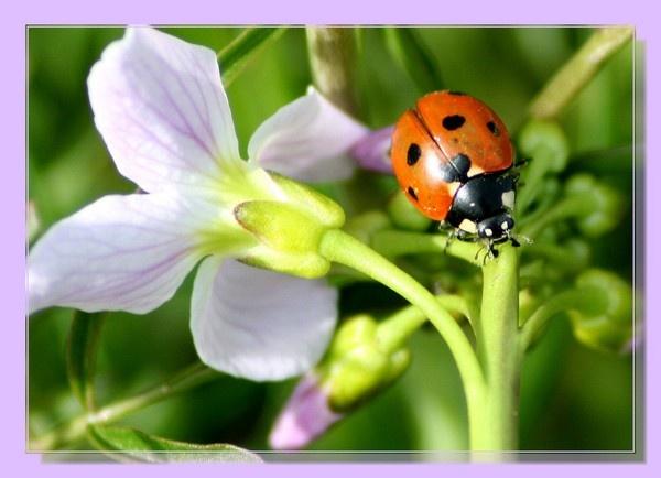 ladybird by johnjones