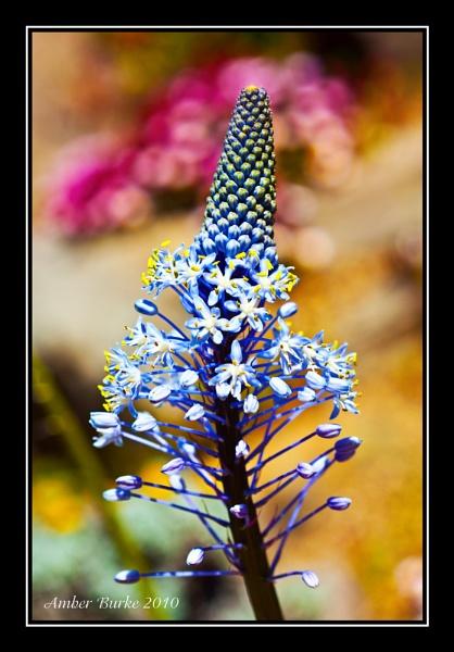 Blue cone Flower by ABurke
