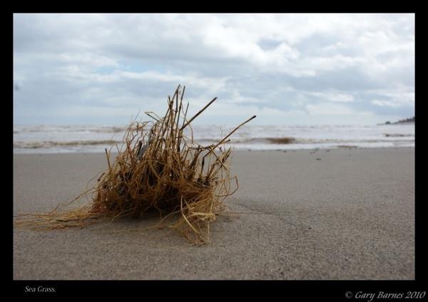 Sea Grass by wag_sfd