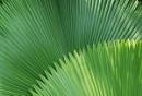 Singapore Palms
