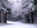 Walk home slowly