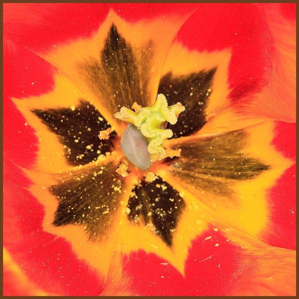 Pollen trap by stomp