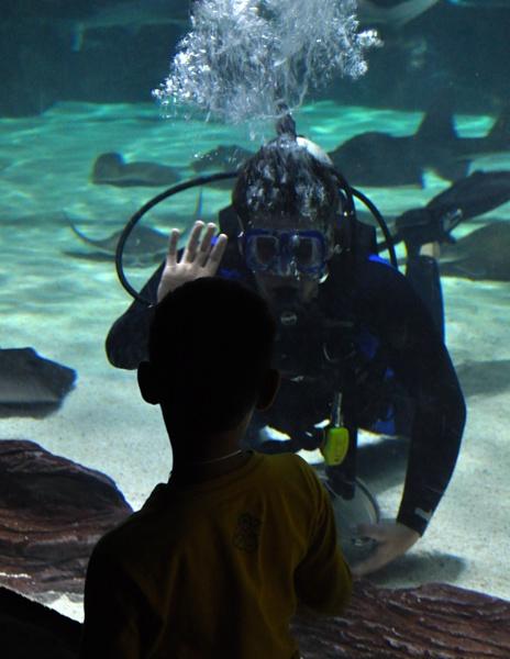 Ripley\'s Aquarium by PeelNStick