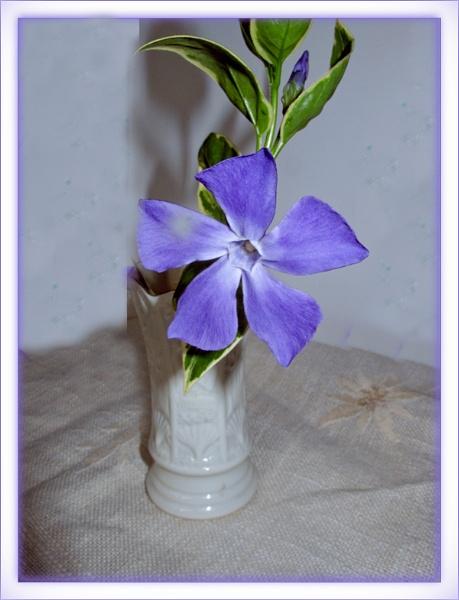 Blue by Mavis
