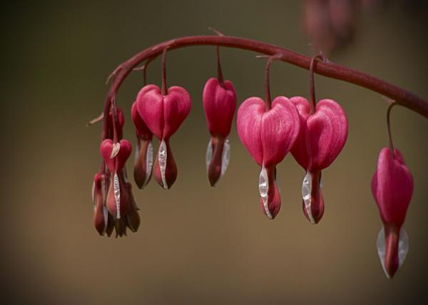 Hearts Bleeding by GPTek