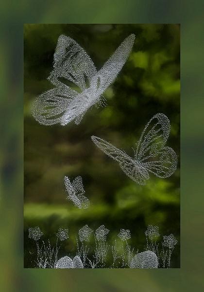 Butterfly Garden by Rogerex