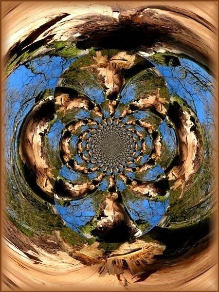 Tree trunk manipulation by catherinekp79