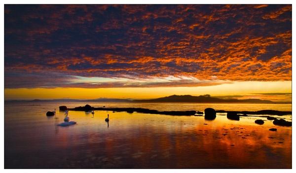 Swan Sunset by douglasR