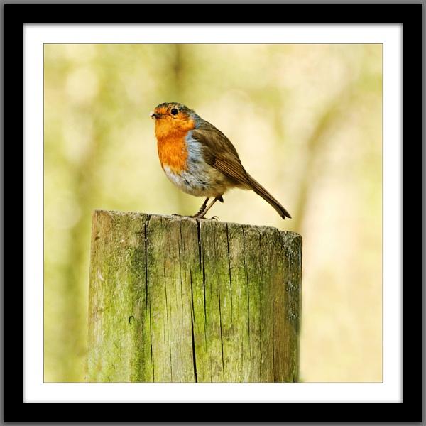Hi, Robin here! by sparklep