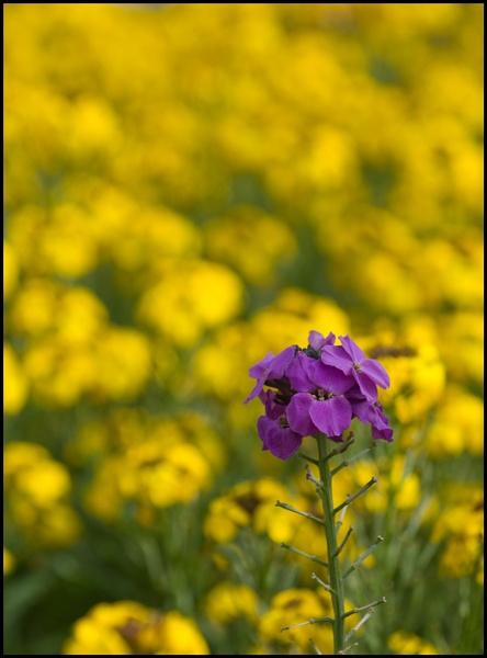 Purple flower by Aristeidis