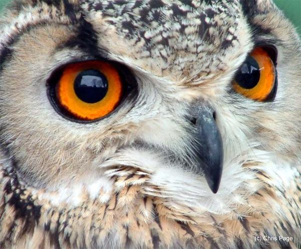 Owl by balance