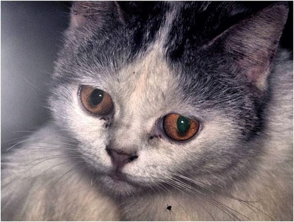 A stray cat by kjteng