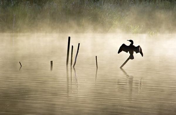 Dawn Warmth by lakemans
