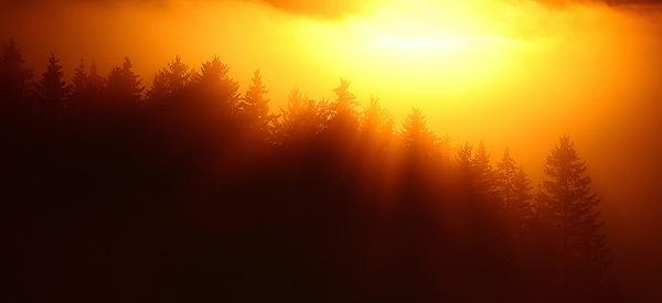 Norwegian Pines by JamesAppleton