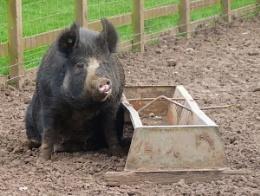 Piggin' itch!!!