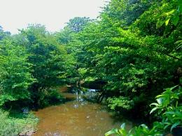 Onipuzha
