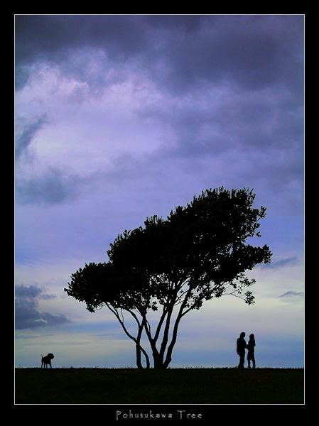 Pohutukawa Tree by SteveNZ