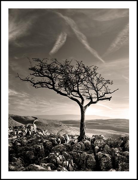 Limestone Mono by philsmed