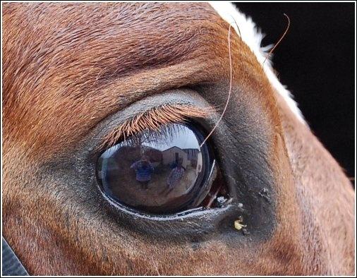 Eye-- by Chubby
