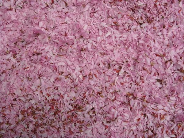 Windblown Petals, 2. by stoplooklisten