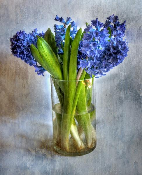 Hyacinths by jonah794