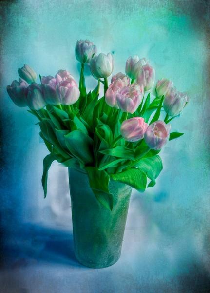 Tulips by jonah794