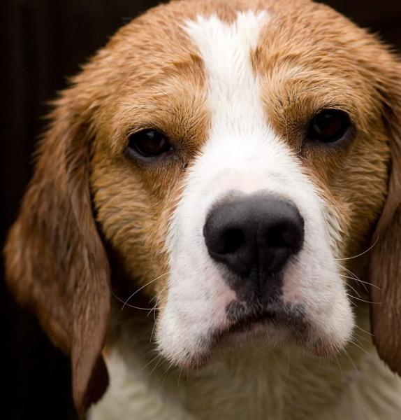 Soggy Doggy II by IanBurton
