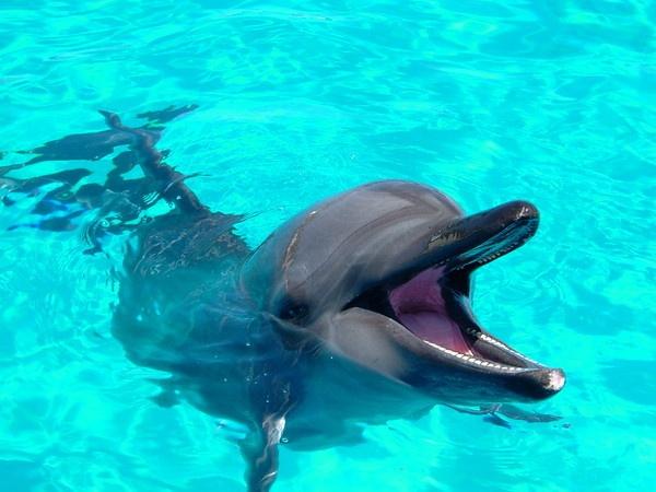 Flipper by popeyebilly