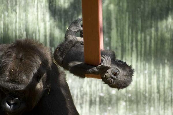 Swinger by Endangered