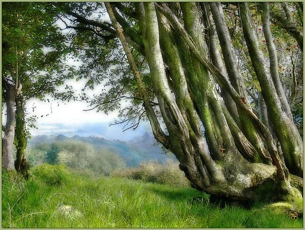 Above Glen Ceiriog by dormay