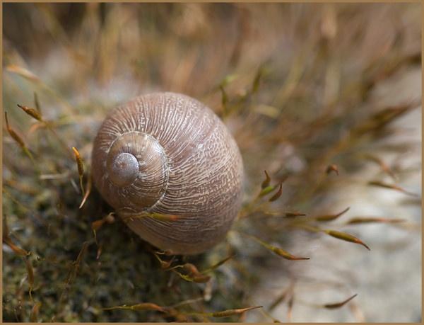 snail by dormay