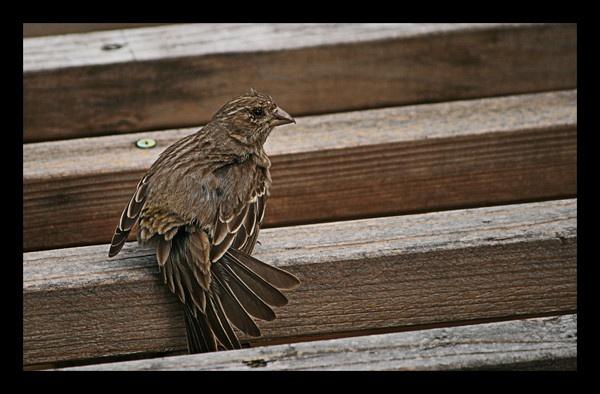 Bird Dance by xmaxonx