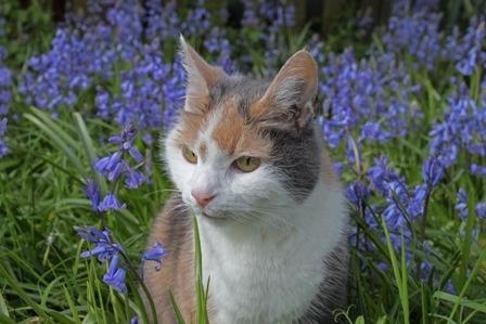 Poppy with bluebells by LizMutimer
