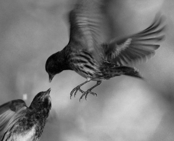 The Lovebirds by neil john